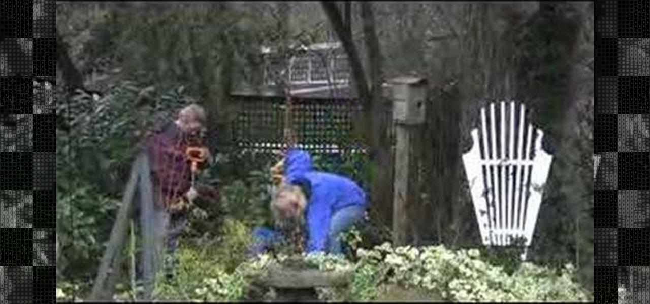 How to plant a dogwood tree gardening - Fir tree planting instructions a vigorous garden ...