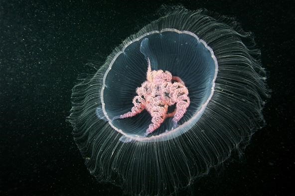 Breathtaking Undersea Aliens: Interview with Deep Sea Photographer Alexander Semenov