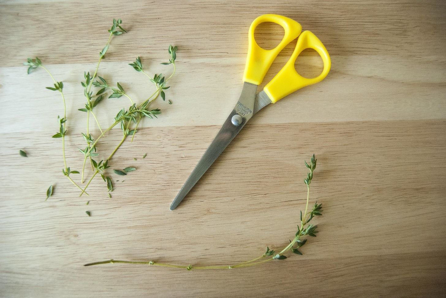 10 Herbs You Can Buy Once & Regrow Forever