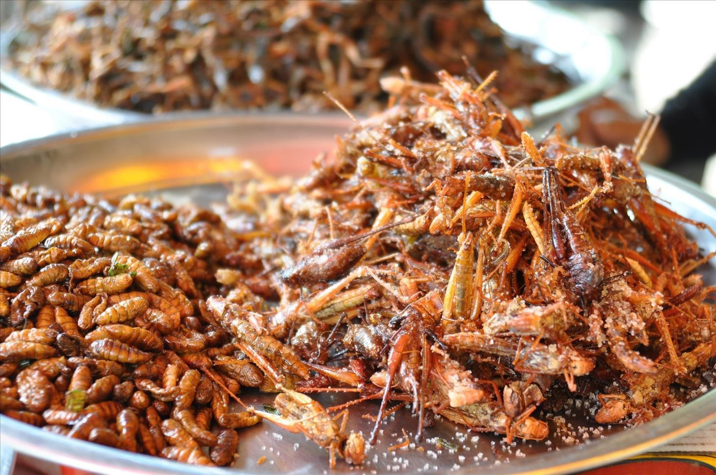 The Intriguing Allure of Eating Crickets
