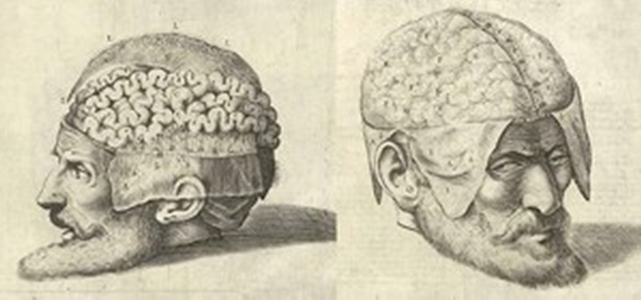 Dissecting a Human Head Through Anatomical Illustrations « Science ...