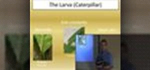 Add a picture-in-picture clip in Camtasia Studio 5