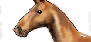 Draw the head of a horse