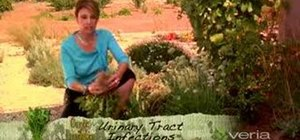 Prevent urinary tract infections naturally