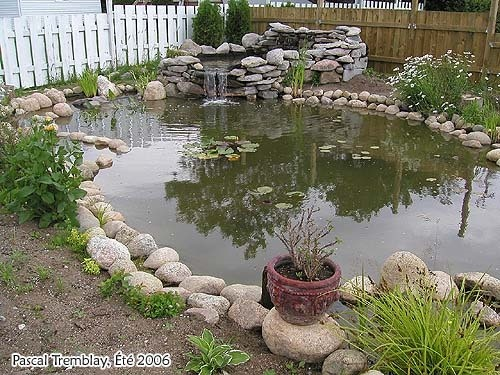 How to build a backyard pond gardening for Building a fish pond
