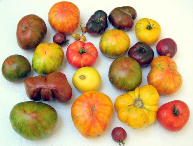 Ingredients 101: Heirloom vs. Hybrid Tomatoes… Ready, Fight!
