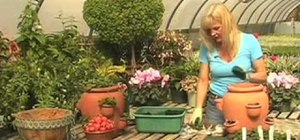 Grow strawberries easily in a container