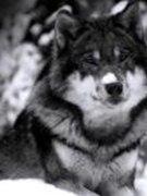 Jessi Wolf