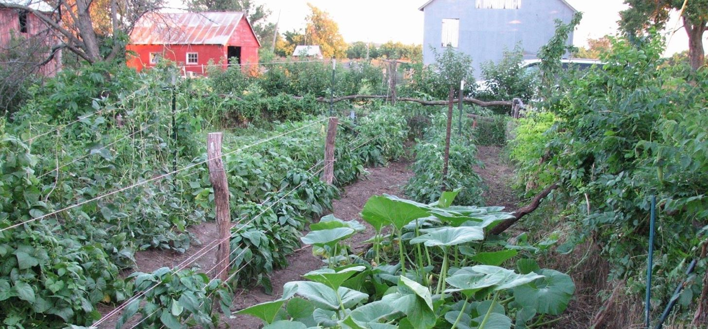 How to Get Rid of Plant-Eating Pests Using 100% Natural Solutions from Your Home and Garden