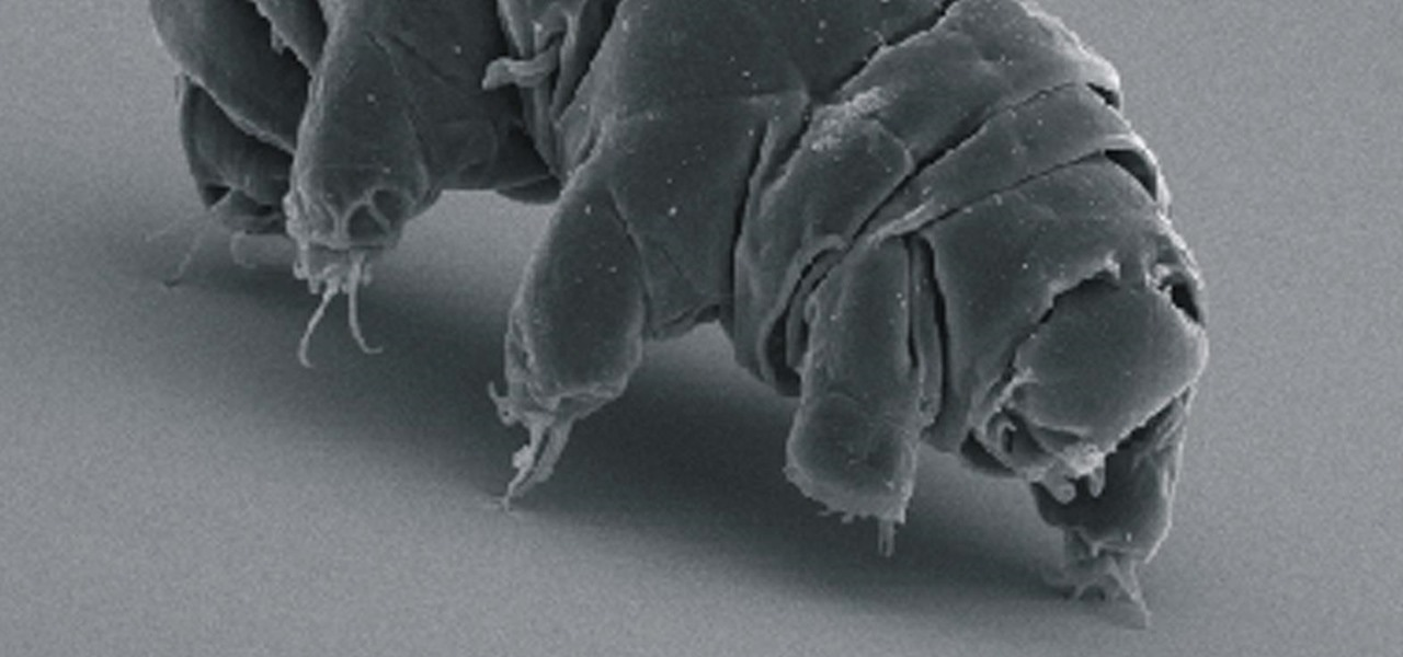 We Finally Figured Out How Tardigrade Can Survive in Space