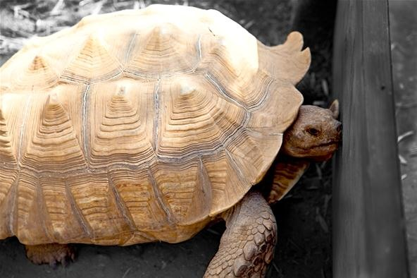 Vibrant Color Photography Challenge: Trapped Tortoise