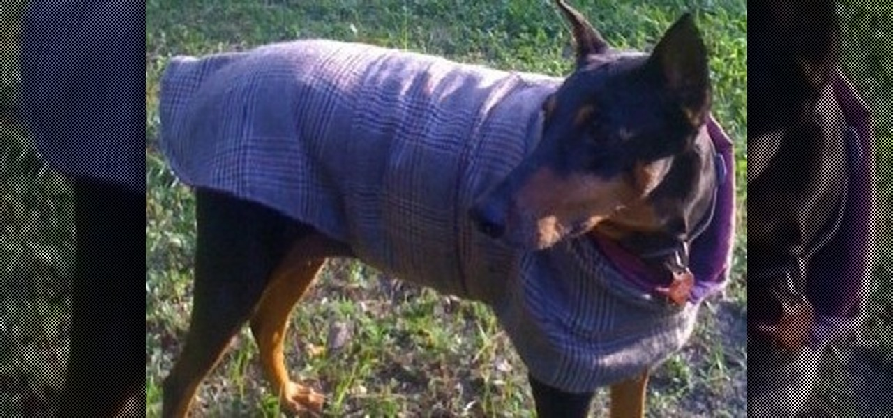 Make a Tailored Coat for Your Pet
