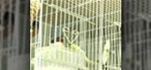 Keep a pet canary