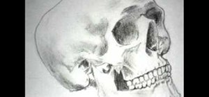 Draw a realistic-looking skull