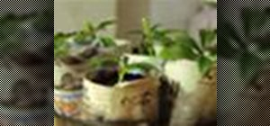 Turn newspaper into starter pots for seedlings