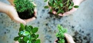 Improve the Soil to Grow Healthy Plants