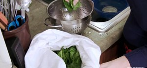 Dry your salad leaves using a cotton pillowcase