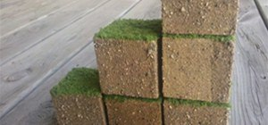 Would you buy this? Real life grass Minecraft cube