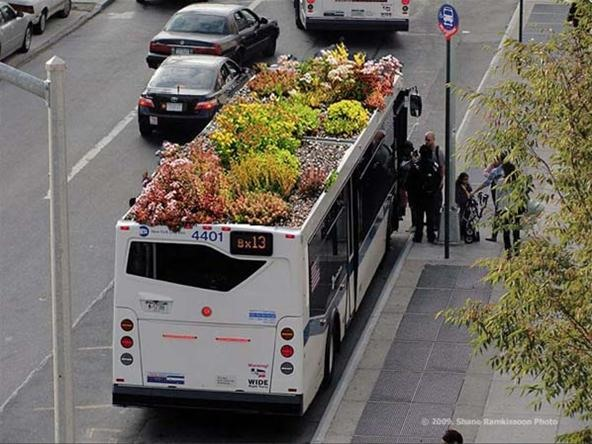 Grow While You Go: The Bus-Top Gardens of New York City