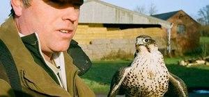 Practice proper falconry
