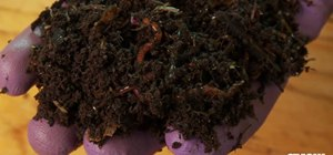 Make your own worm compost out of kitchen waste
