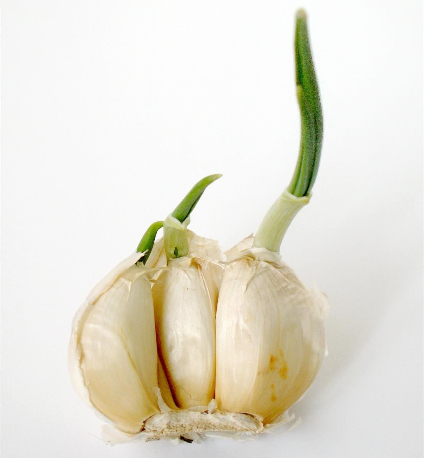 10 Vegetables You Re Grow From Kitchen Scraps: 10 Vegetables & Herbs You Can Eat Once & Regrow Forever