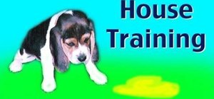 House train your new puppy or rescue dog