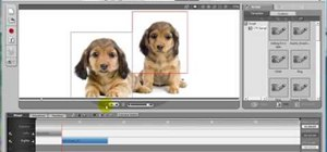Make animated pet dialogue using Crazy Talk software