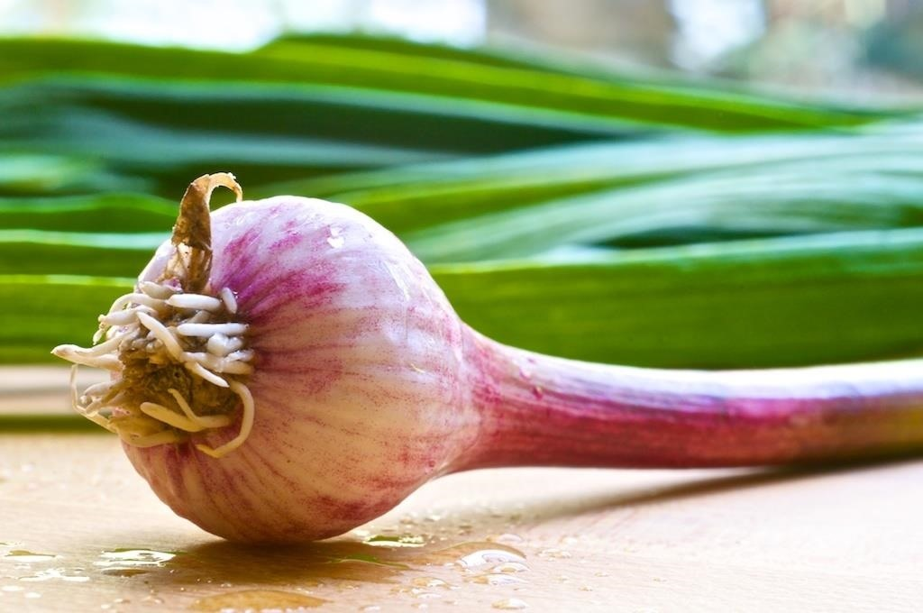 How to Cook for Garlic & Onion Haters: Alternatives & Substitutes