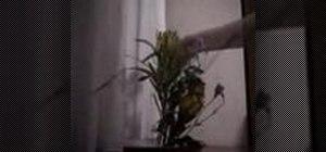 Make an Ikebana flower arrangement