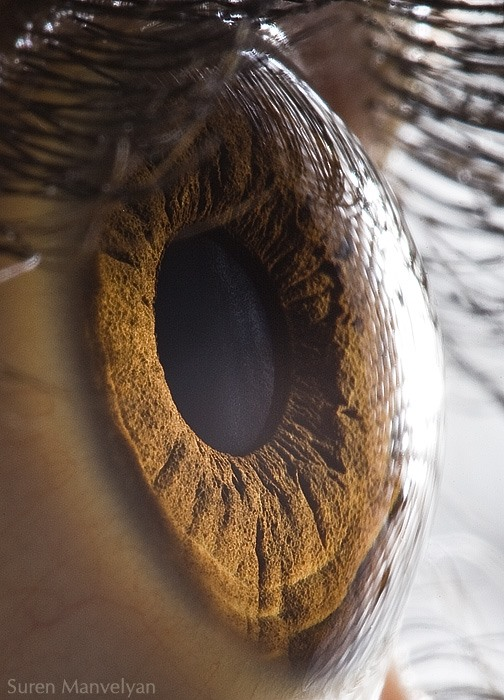 AMAZING What You Can Capture With a Macro Lens!