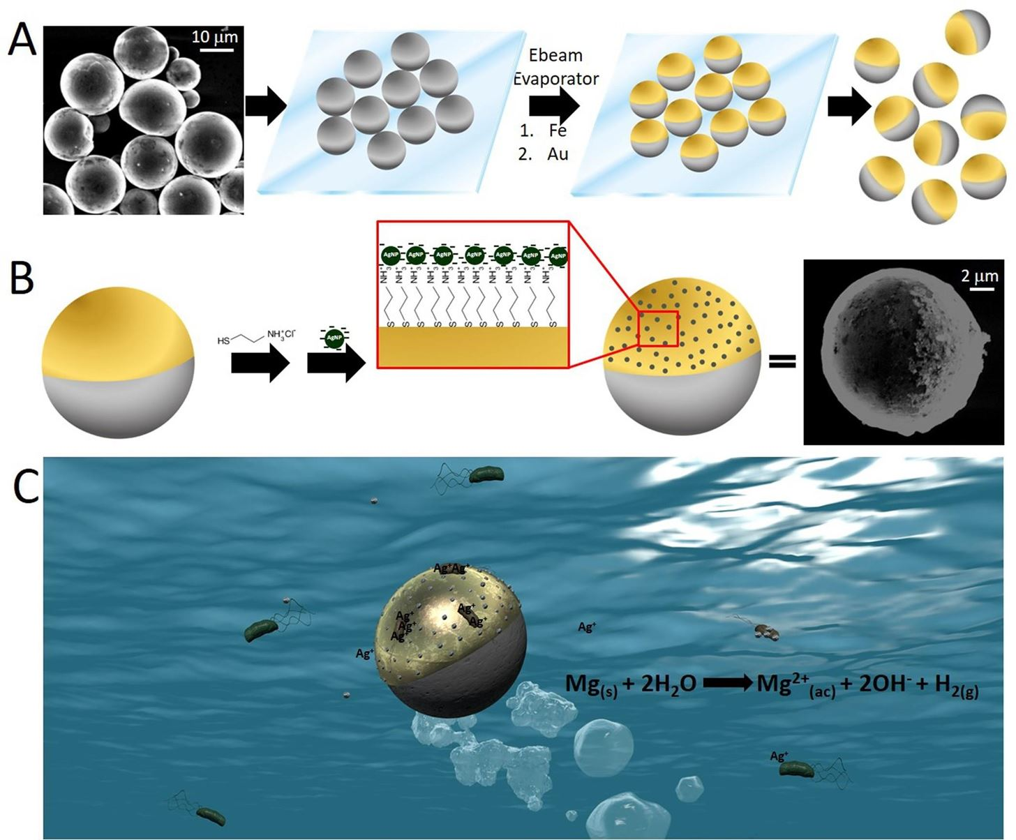 Microbots to the Rescue! Swimming Bots Kill Bad Water Microbes