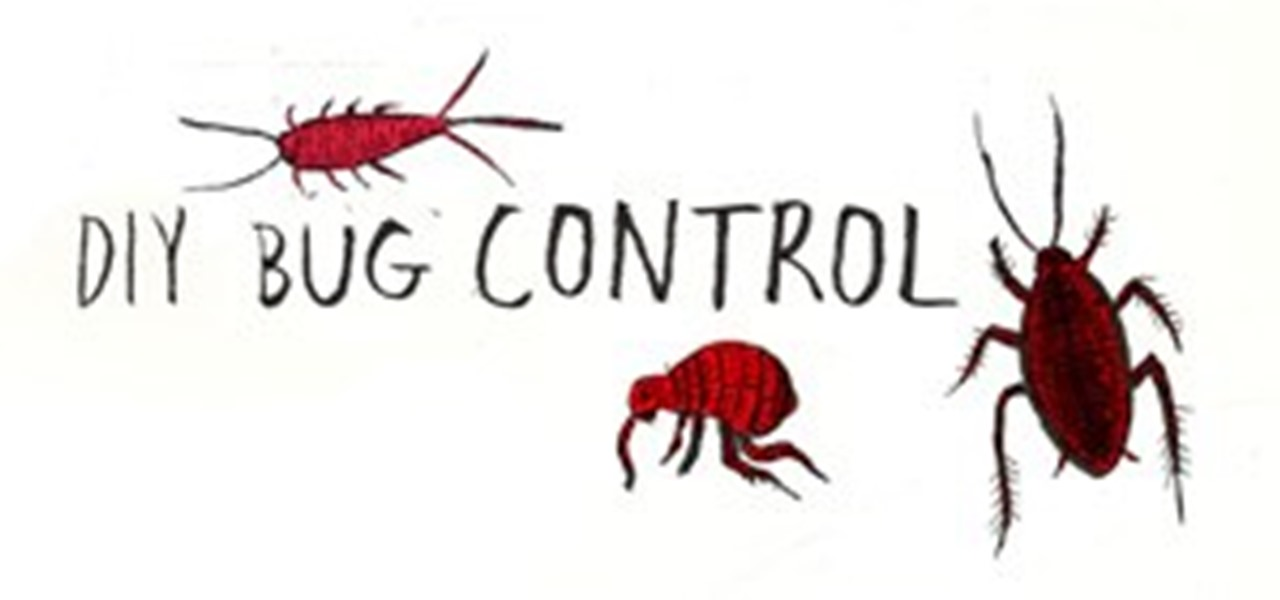 Your DIY Bug Repellent Guide to Common Household Pests Â« The ...