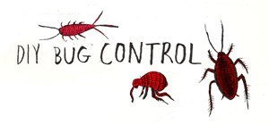 Your DIY Bug Repellent Guide to Common Household Pests