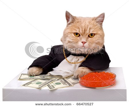 cats with money