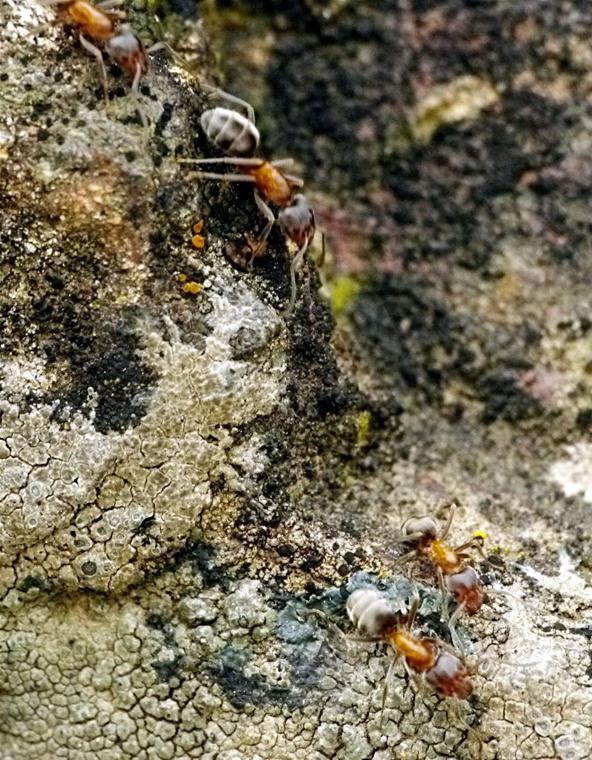 Insect Photography Challenge: Shots and Video