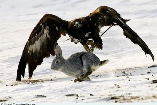 Falcon Annihilates Fox and Deer