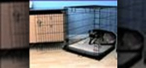 Makethe crate a fun place for a dog
