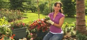 Choose plants that love shade with Lowe's