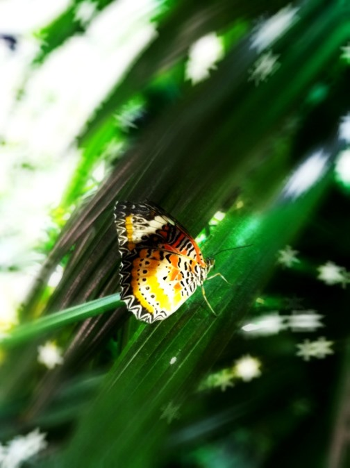 Bokeh Photography Challenge: Butterfly