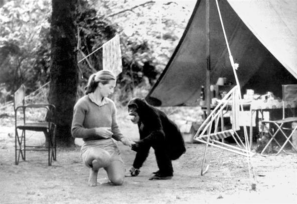 http://img.wonderhowto.com/img/51/31/63420490877533/0/jane-goodall-was-babe-and-one-historys-greatest-conservationists.w654.jpg