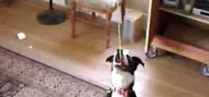 Entertain your dog with a balloon