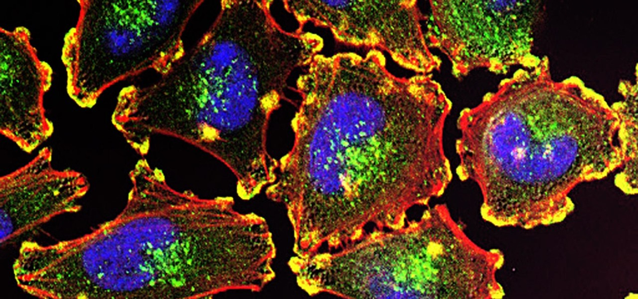 A Double Punch of Viruses & Immunotherapy Could Improve Outcomes for Cancer Patients