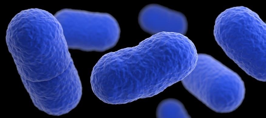 Listeria May Be a Cause of Early Undiagnosed Miscarriage