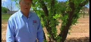 Identify fruit tree problems