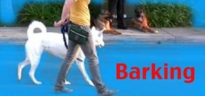 Stop a dog barking while on a leash