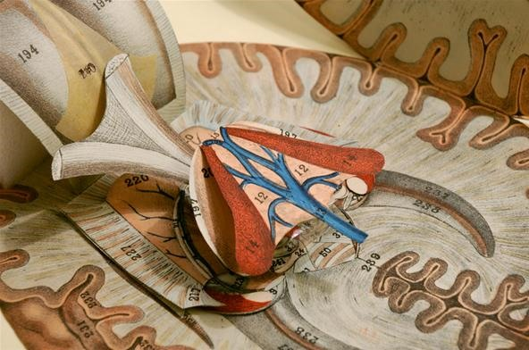 Human Dissection Illustrated in Anatomical Pop-Up Books