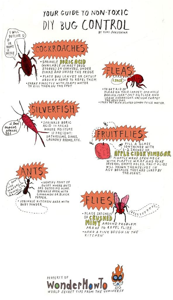 House pests bugs pictures
