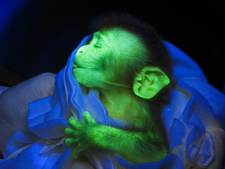Fluorescent Puppies You Can Turn On and Off