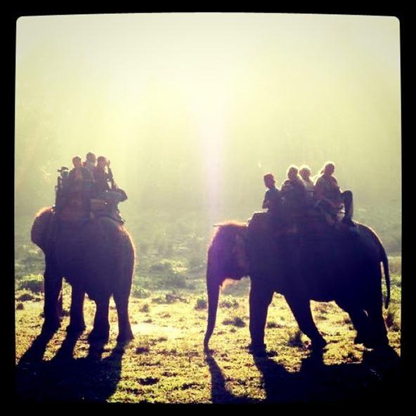 Instagram/PicPlz Challenge: Chitwan national park